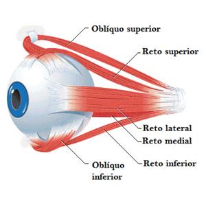 movimento dos olhos